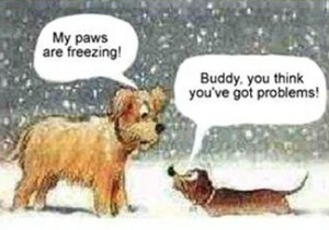 christmas_dog_freezing
